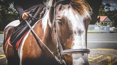 Portraits, Video Capture, Daily Photo, New Zealand, Photo Gifts, Horses, Fine Art, Animals, Design