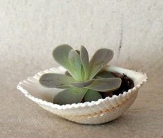 Loving this. Little ceramic container Matthew made will be perfect for a little succulent.