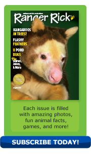 August 2013 issue of Ranger Rick magazine featuring a tree kangaroo