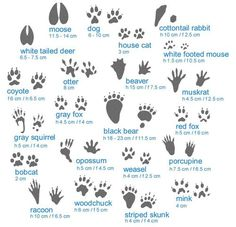 Identify the critter thats making tracks in your garden...awesome!