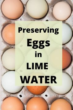 """Ever wonder how to store all of those beautiful farm-fresh eggs that your hens are laying? Can they be preserved without refrigeration? Check out """"Preserving Eggs in Lime Water"""" for a simple easy way to preserve those extra eggs! Egg Storage, Food Storage, Backyard Farming, Chickens Backyard, Preserving Eggs, Storing Eggs, Mini Farm, Chicken Eggs, Raising Chickens"""