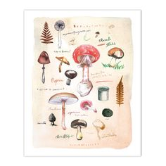 """Mushroom chart Archival giclee reproduction print from my watercolor illustration. Signed with pencil. Printed on fine art """" BFK Rives """" hot-pressed paper, smooth surface, 140 lb, 100% cotton (acid fr"""