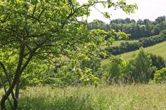 Summer view of Prestwood Local Nature Reserve, Bucks - it is hard to believe the this used to be a dump of old car tyres!
