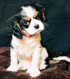 Baby Dilly  by meg price, via Flickr
