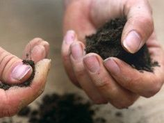Your garden soil's acidity or alkalinity affects what plants you can grow. Use these tips from HGTV to decide which type of soil you have. Types Of Lawn, Types Of Soil, Garden Site, Garden Tools, Garden Ideas, Backyard Ideas, Landscaping Tips, Garden Landscaping, Organic Gardening