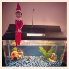 1000 images about elf ideas on pinterest elf on the for Elf on the shelf fishing