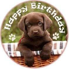 Wish you a very happy birthday – puppy image - Happy birthday images Animal Puppies