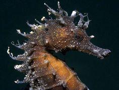#Caballo de mar #Nature