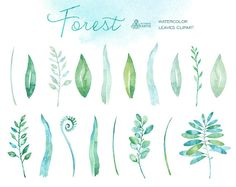 Forest watercolor leaves. 18 handpainted clipart от OctopusArtis