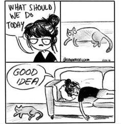 Denkst du gerade darüber nach, dir eine kleine süße Katze zuzulegen? Dann schau dir das vorher besser nochmal an!