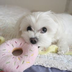 Hands off!...This donut is mine!