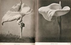 'Lilliput' comparison (9): taken from 'Pocket Omnibus' (1937/38) by petkenro, via Flickr