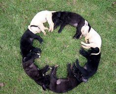 Dog Circle - cute picture of sleeping dogs