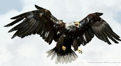 eagles drawings - Google Search