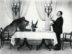 Alfred Hitchcock serving the MGM lion #art #photography #portrait #portraiture #filmhistory #cinema #mgm #hitchcock
