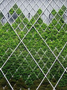 ♂ Green Vertical Garden modern architecture - mesh on parapet with green facade.