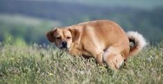 All Mammals Take the Same Amount of Time to Poop, Scientists Find Dog Pee, Irritable Bowel Syndrome, New Puppy, All Dogs, Tricks, Funny Dogs, Mammals, Dog Training, Your Dog
