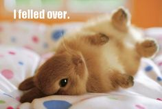 Bunny felled over