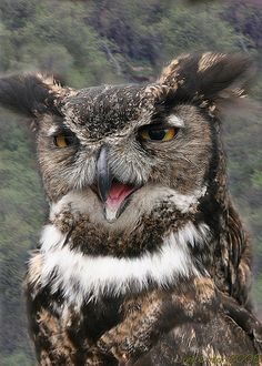 ~~Mr. (or Mrs.) Owl | Ketchikan, Alaska by I Shutter~~