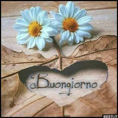 Buongiorno | BESTI.it - immagini divertenti, foto, barzellette, video Happy Day, Good Morning, Lily, Aunty Acid, Postcards, Relationship, Seasons, Animal, Good Night Msg