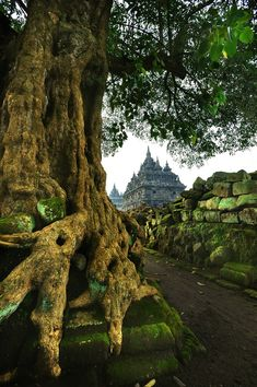 Plaosan Temple in Central Java, Indonesia (by simplyoga).