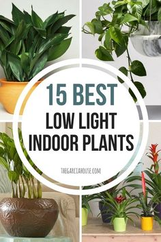 Looking for plants that can grow in your darkest rooms? Check out my list of the 15 best low light indoor plants! These plants need little to no sun light!