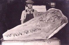 Mosasaurs skull. Imagine it alive in the water,...  go have a swim.
