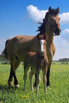 Mamá y cría de caballo
