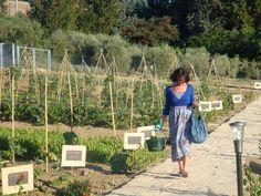 Italian Vegetable Garden   Italy