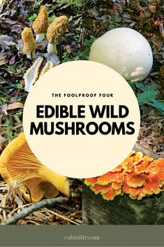 The Foolproof Four: Edible Wild Mushrooms - Cabin Activities - Moral Mushrooms, Edible Wild Mushrooms, Garden Mushrooms, Chicken Mushrooms, Stuffed Mushrooms, Puffball Mushroom, Mushroom Identification, Growing Mushrooms At Home, Edible Wild Plants