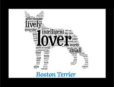 Graceful and lithe in appearance, the Boston Terrier has a big heart and loveable nature. The Bedlington Terrier breed is best known for its curly, woolly coat which starts out dark in puppyhood and f