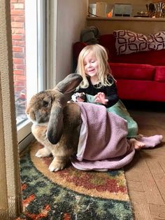 Spending a quiet afternoon with a big bunny in a blanket...