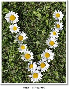 Free art print of Letters of daisies. Get up to 10 Gallery-Quality Art Prints for Free. Flower Names, Flower Art, Gift Card Printing, Daisy Wallpaper, Stylish Alphabets, Daisy Art, Moon Photography, Free Art Prints, Amazing Flowers