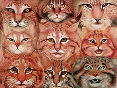 tiffany bozic art | ... paintings from the portfolio of the American artist Tiffany Bozic