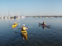 Kayak Shop Australia, the sea kayaking specialists in Melbourne. Offering sea kayak products, hire, rentals, courses and training. Recreational Kayak, East Coast, How To Introduce Yourself, Kayaking, Melbourne, Coastal, Surfing, Boat, Australia