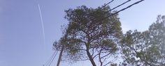 Ecologistes en Acció es queixa de l'estat de les línies elèctriques del massís del Garraf