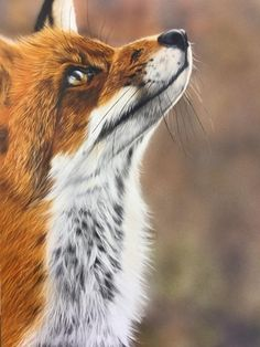Airbrush Art School – provide lessons from beginner to advanced, portraits, wildlife, custom painting and many more. Visit the website to start your airbrush journey. Air Brush Painting, Painting Studio, Airbrush Art, Custom Paint, Art School, Wildlife, Brushing, Gallery, Artwork