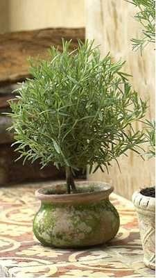 Rosemary tree: must try!