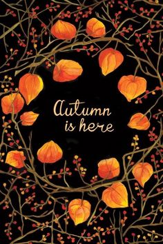 Rustic autumn chinese lantern illustration by Karina Manucharyan September, October, November Fall Hello Autumn, Autumn Day, Autumn Leaves, Fall Winter, Autumn Aesthetic, Orange Aesthetic, Fall Wallpaper, Wallpaper Backgrounds, Trendy Wallpaper