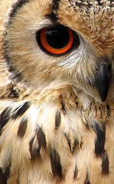 The eye of owl is upon you