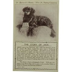 """""""The Story Of Jack"""" Collection Dog For Charity Postcard from antiquepooch on Ruby Lane"""