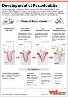 An In-Depth Look at Dental Disease in Dogs & Cats | VetDepot.com