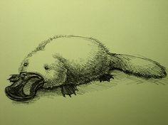 animal, drawing, illustration, platypus, sketch