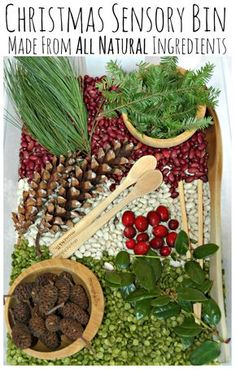 All Natural Christmas Sensory Bin. Made with materials from nature (and the grocery store) with no dying needed. Great fun for kids! Maybe no legumes for toddlers. Sensory Tubs, Sensory Boxes, Sensory Activities, Winter Activities, Sensory Play, Activities For Kids, Motor Activities, Sensory Diet, Baby Sensory