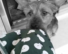 Dog bandana/scarf Christmas snowmen