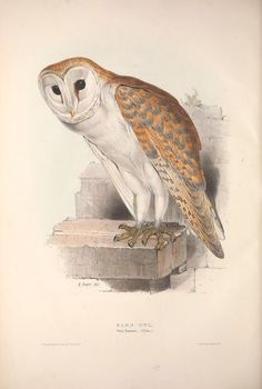 https://flic.kr/p/fjw4xe | n169_w1150 | The birds of Europe.. London,Printed by R. and J.E. Taylor, pub. by the author,1837.. biodiversitylibrary.org/page/42174383
