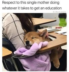Funny Animal Memes, Dog Memes, Funny Dogs, Funny Memes, Cute Little Animals, Cute Funny Animals, Funny Cute, Cute Puppies, Cute Dogs