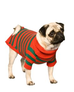 Christmas red and green elf, santa's little helper style striped knitted dog sweater/clothes/coat/costume in lambswool, size medium. £30.00, via Etsy.