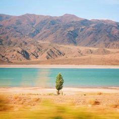 Regram @e.digernes #nature #beach #oceans #rocks #waves #tree...