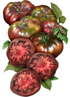 Ineffable Secrets to Growing Tomatoes in Containers Ideas. Remarkable Secrets to Growing Tomatoes in Containers Ideas. Growing Tomatoes From Seed, Growing Tomatoes In Containers, Growing Vegetables, Grow Tomatoes, Tomato Seedlings, Tomato Seeds, Tomato Plants, Backyard Vegetable Gardens, Tomato Garden